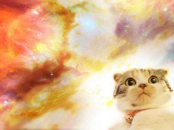 Space-Cat-1920×1080-Imgur-wallpaper-wpt7208695