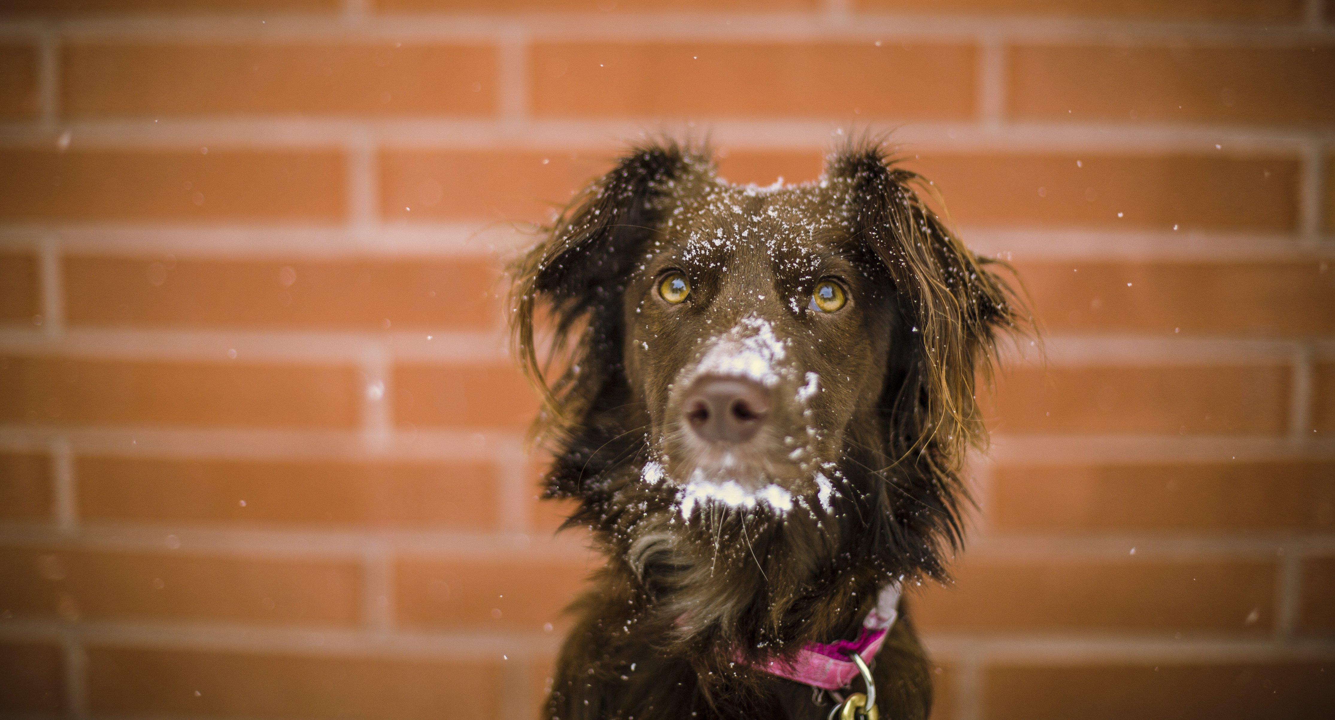Jest bardzo zimno! Zadbaj o zwierzęta!