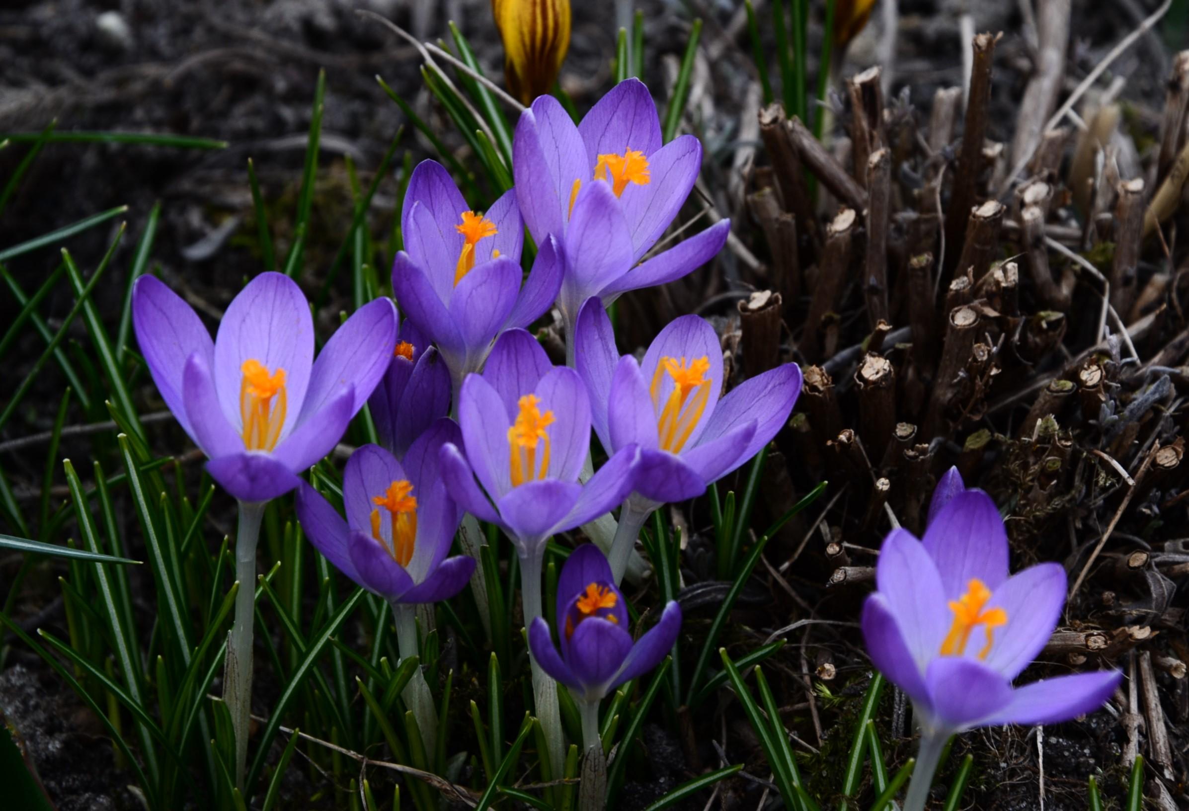 Wiosna nadchodzi…