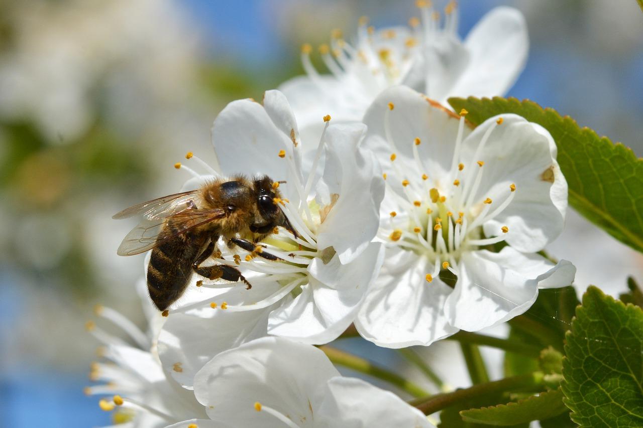 Chroniąc rośliny, chrońmy pszczoły