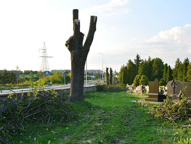 drzewa cmentarz chelm