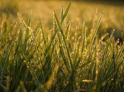 grass-4146522_1280