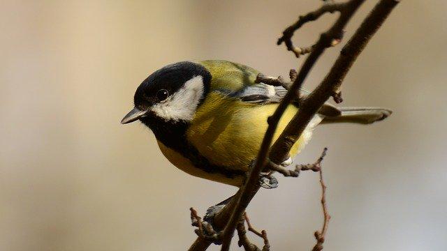 Zimowe liczenie ptaków