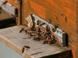 bee-colonies-4027054_640